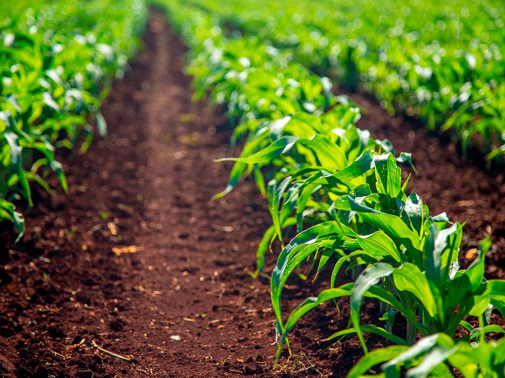 Problemas de solo na Agricultura