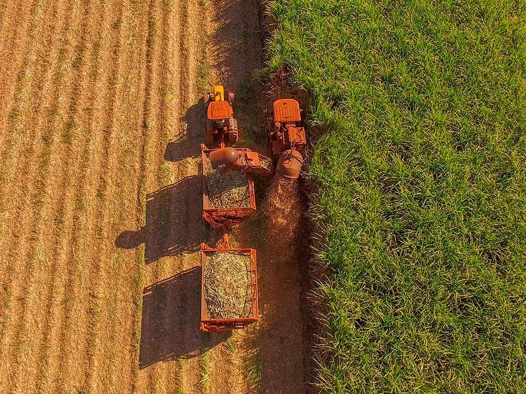 Perdas na colheita de cana: Você sabe como reduzi-las?
