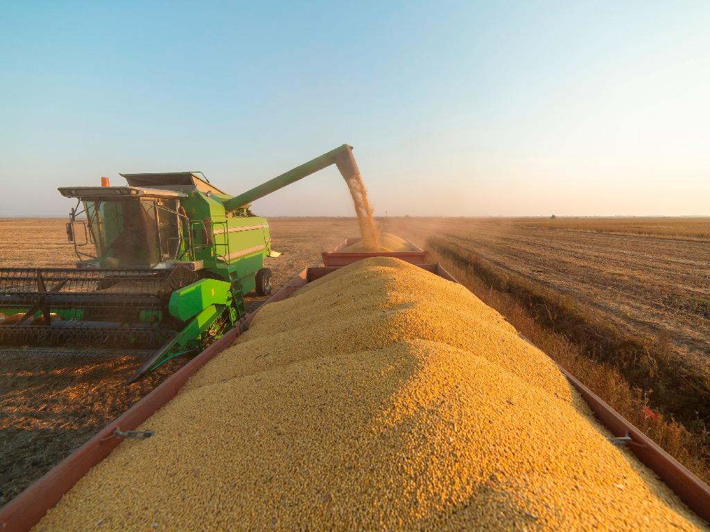 Colheita de Soja. 10 dicas para melhor produtividade
