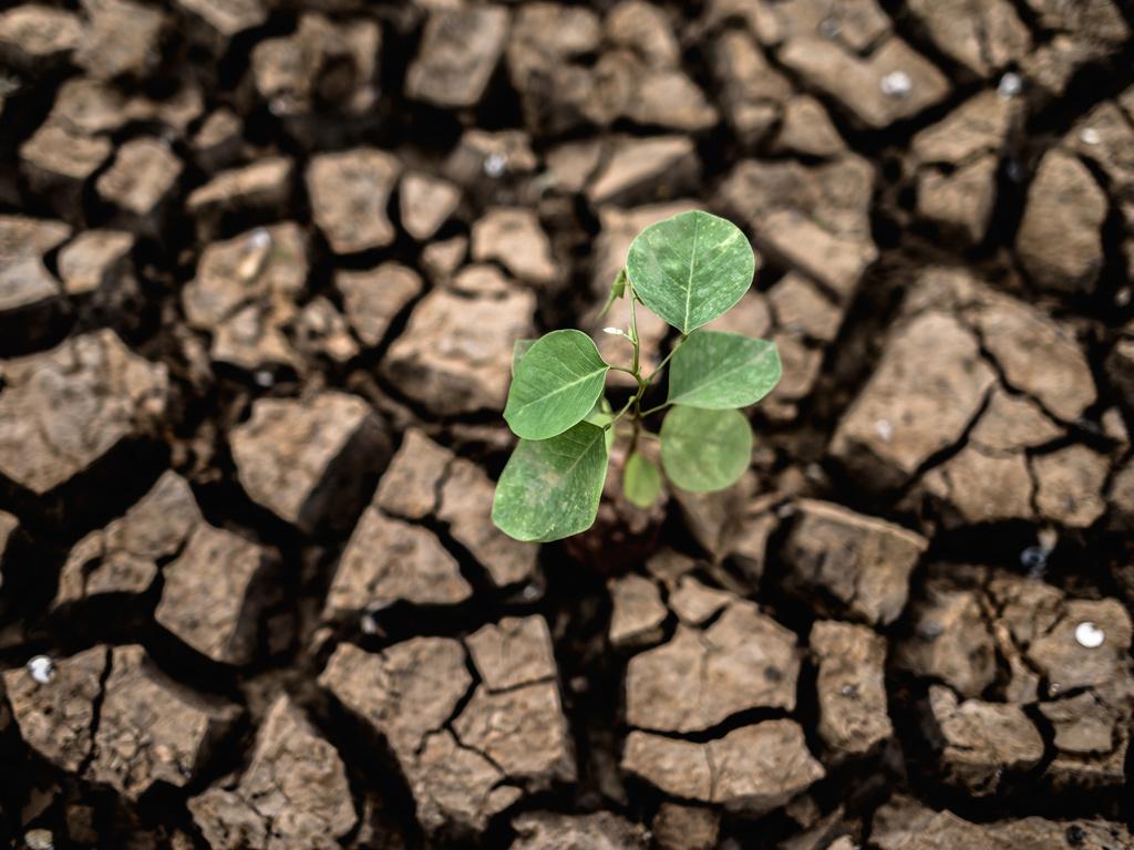 7 dicas para minimizar os efeitos da seca no agronegócio