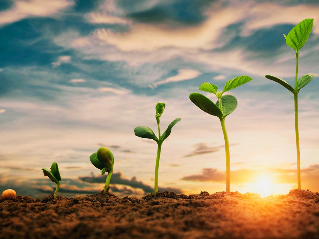 6 dicas do especialista para melhorar a plantação de soja