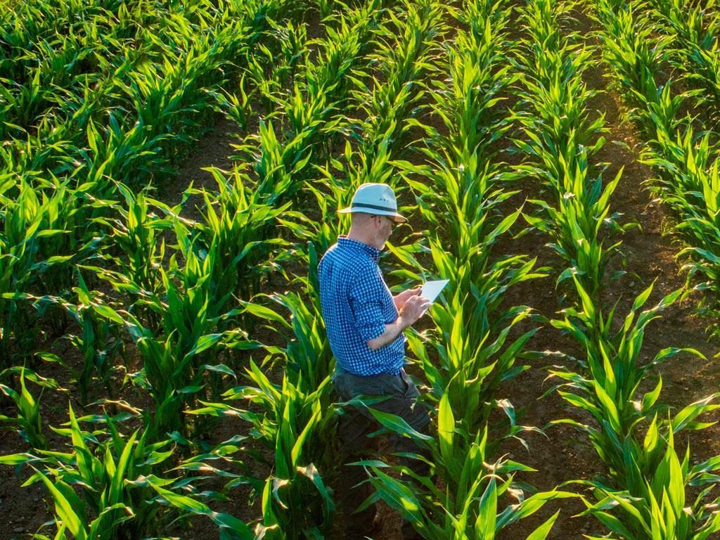 Aplicativo Rural. Conheça os melhores para seu negócio