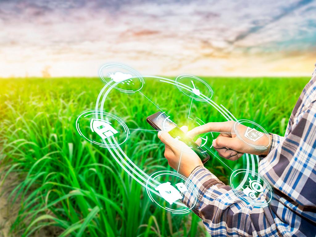 Administração rural: Trate a lavoura e criação como negócio