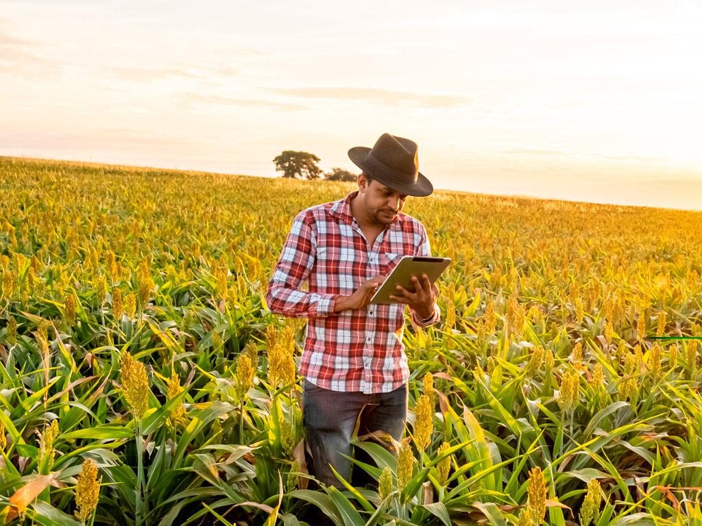 Estudo de Caso: tomada de decisão com um software agrícola