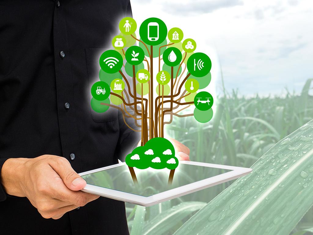 Agricultura 4.0 na gestão de lavouras de cana-de-açúcar