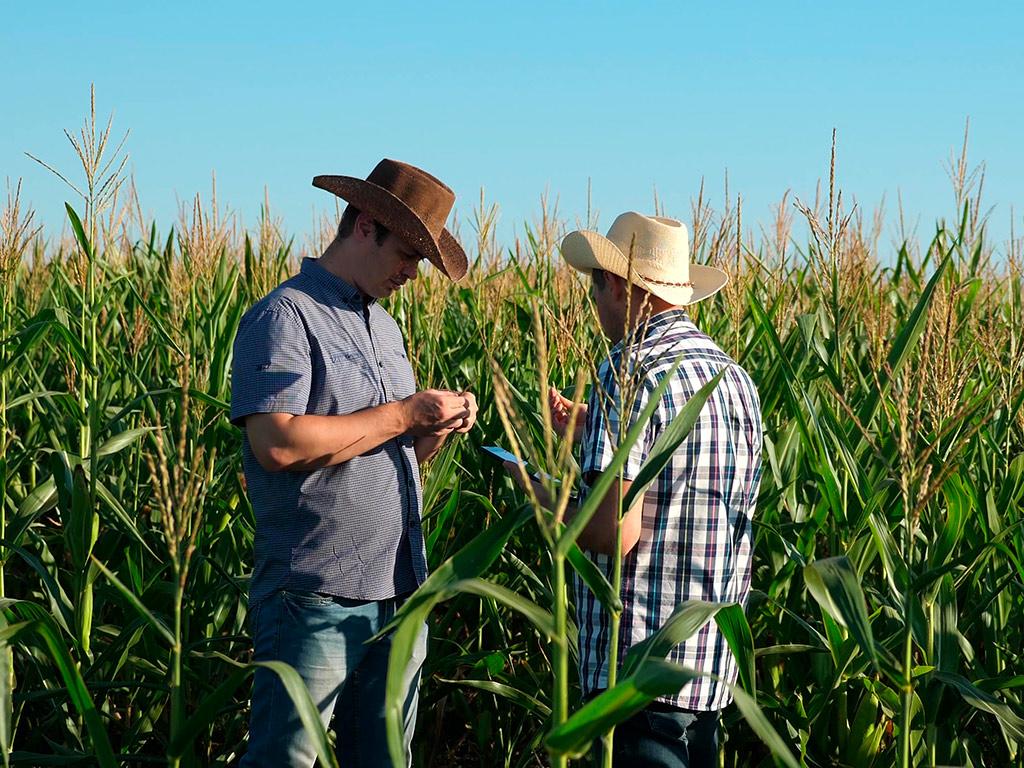 Sucessão familiar na agricultura: como fazer de forma serena