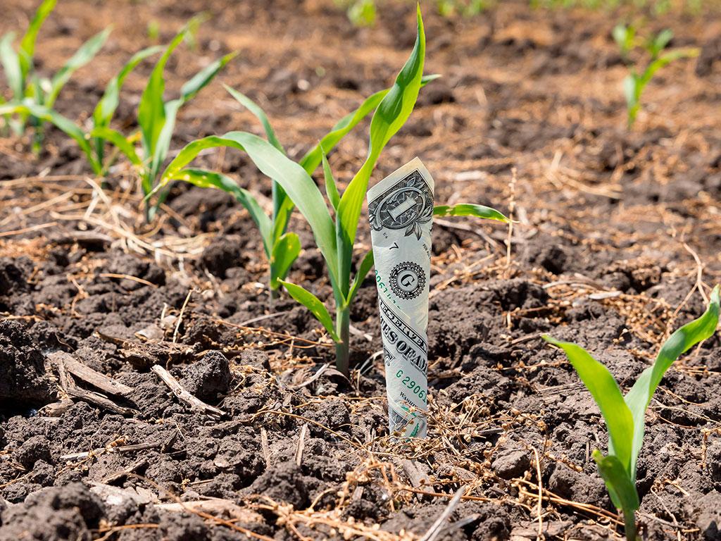 Alta do dólar x Insumos agrícolas mais caros: como enfrentar