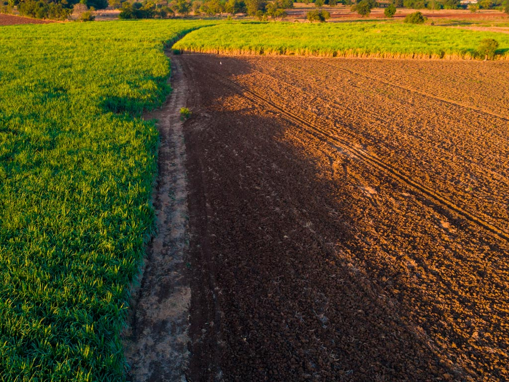 Adubo para lavouras de cana-de-açúcar: dicas e recomendações