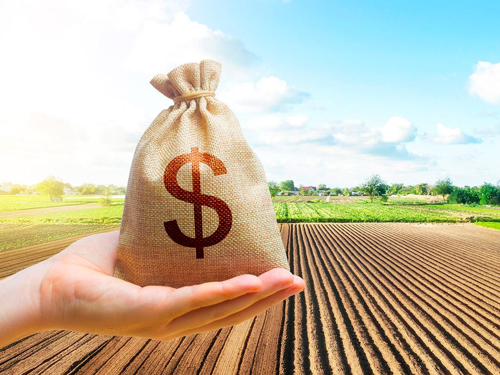 Controle financeiro na lavoura: Como e porque fazer