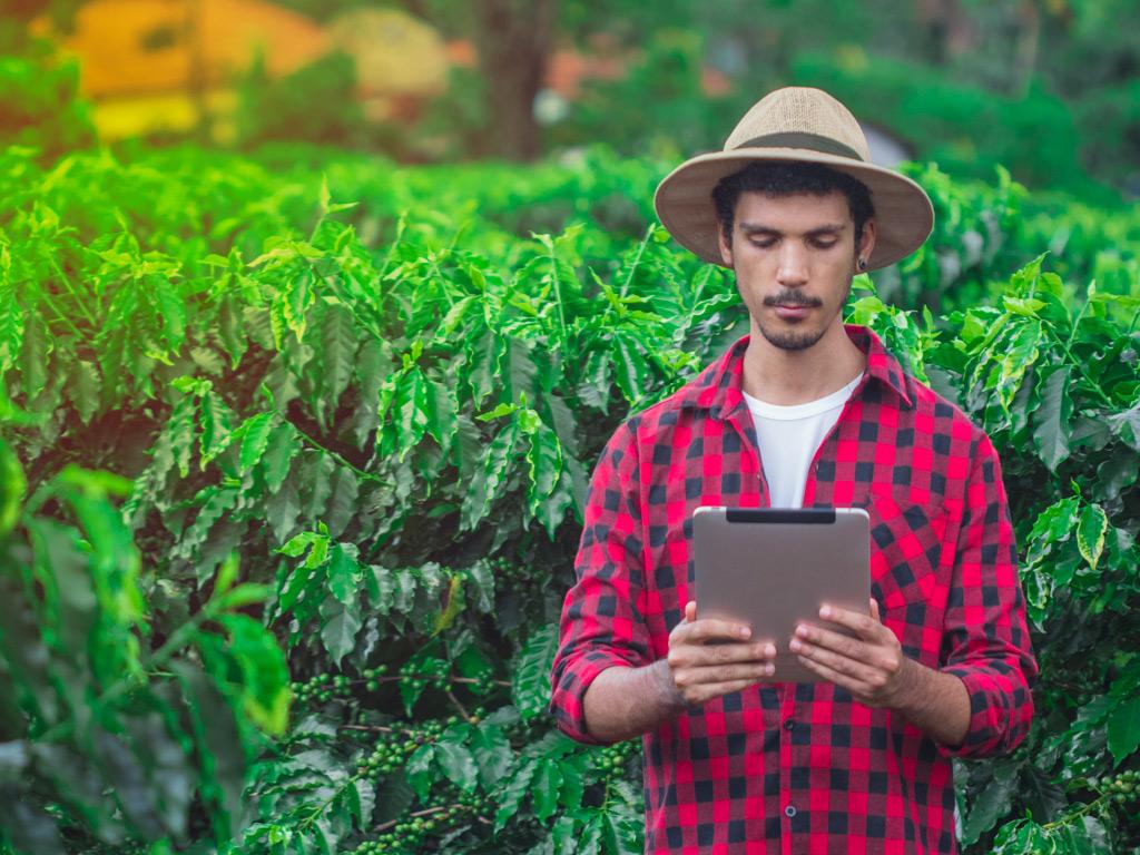 Gestão e tecnologia: melhore o rendimento da saca de café