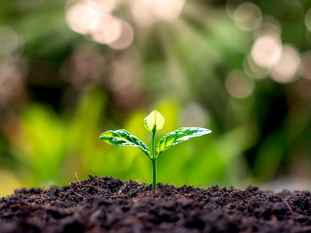 Preservação do solo: Recomendações para uso mais sustentável
