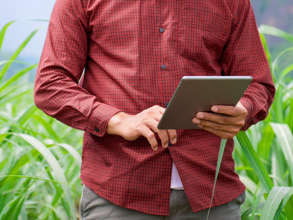 Práticas sustentáveis para a produtividade dos canaviais