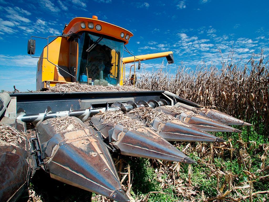 Colheita de milho mecanizada: benefícios da colheitadeira