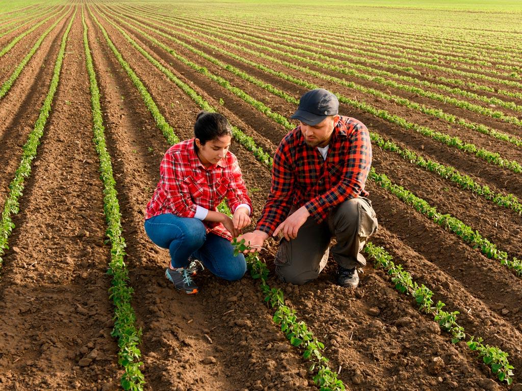 Benefícios para a soja do uso de herbicidas pré-emergentes
