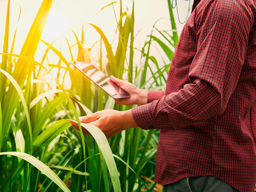 Custo Agrícola por fazenda, talhão e operação no cultivo da Cana