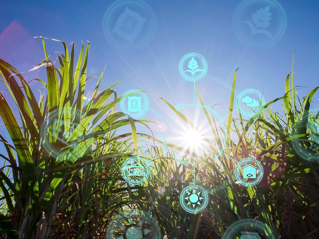 Agricultura de Precisão do plantio à colheita na Cana-de-Açúcar