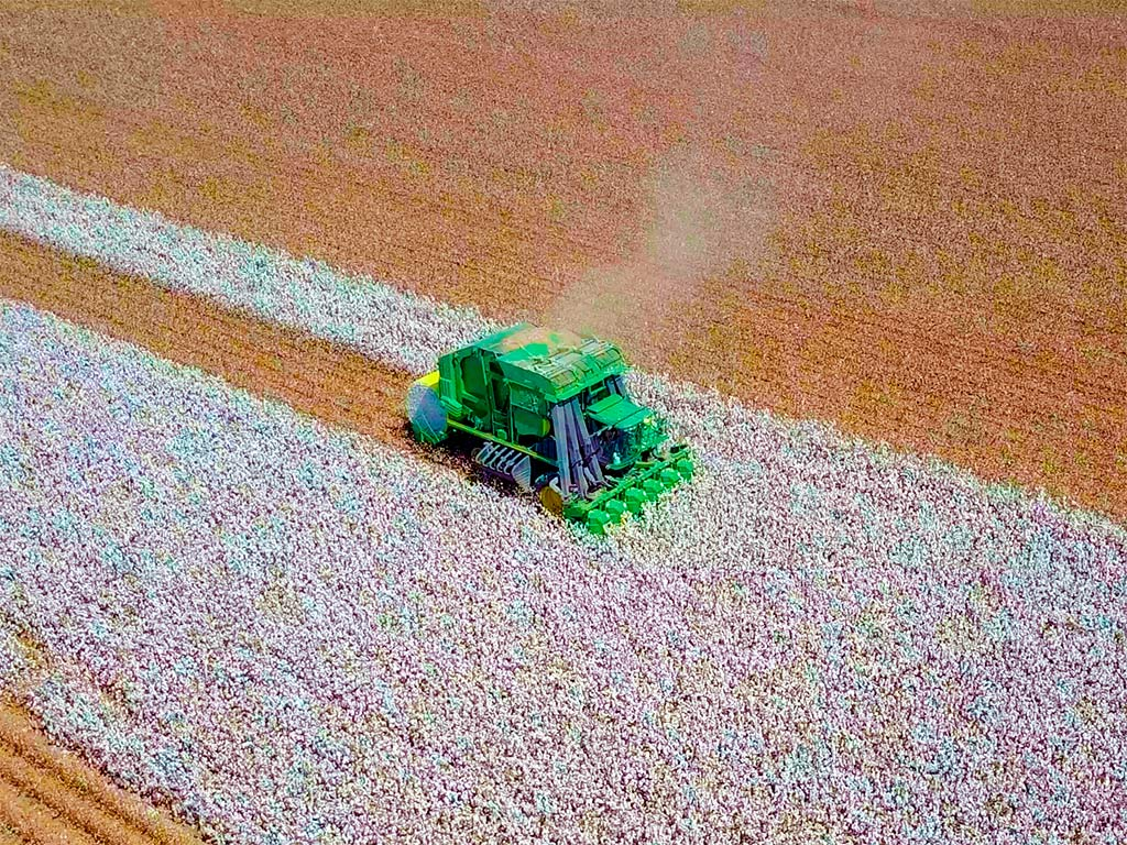 Colheita de Algodão: Os tipos e a importância da mecanização