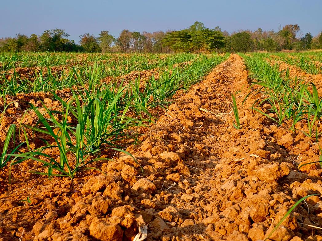 Manejo do solo para cultivo da cana-de-açúcar