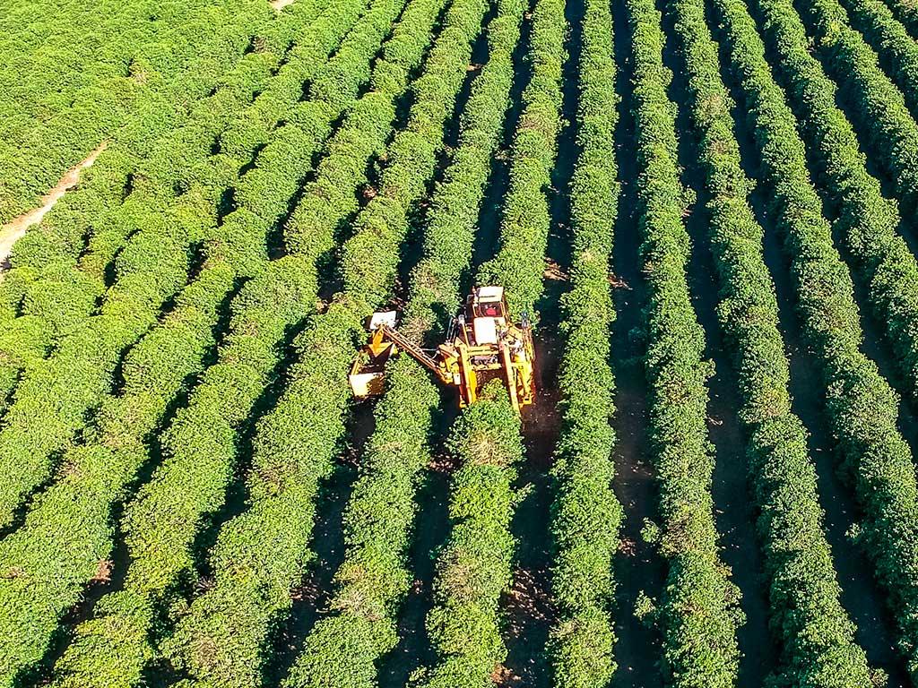 Principais Tecnologias e Máquinas Agrícolas na Cafeicultura