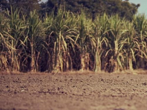Conheça as principais técnicas de manejo do solo nos canaviais