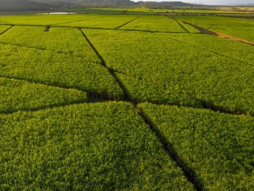 CHBAGRO faz a diferença na gestão da Fazenda Boa Esperança