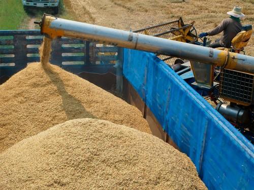 Situação e expectativas da colheita do arroz em 2021