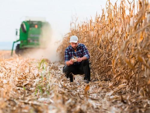 Falta de chuvas no país abala a produtividade do milho