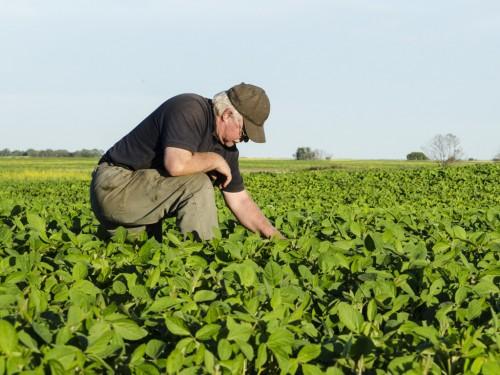 Controle de Pragas, Doenças e Daninhas na Plantação de Soja