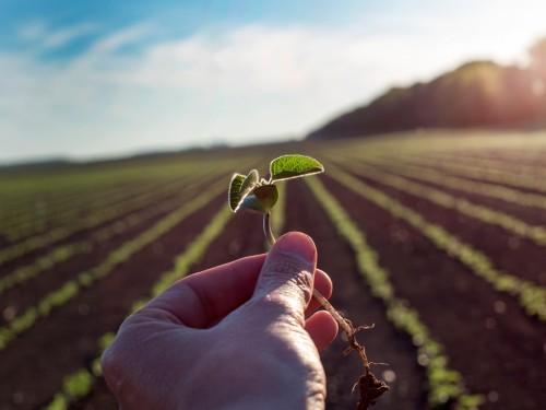 Cultivo da Soja: Tudo o que deve ser feito para a excelência