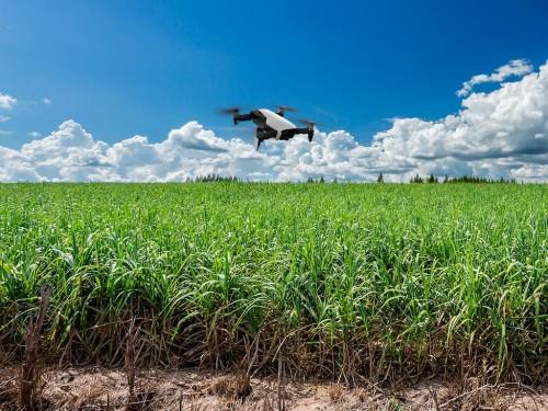 Ranking de Despesas em Tecnologia no Cultivo da Cana-de-Açúcar