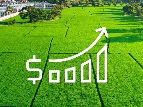Plano Safra 2021/2022 oferece R$ 251,2 bi em crédito rural