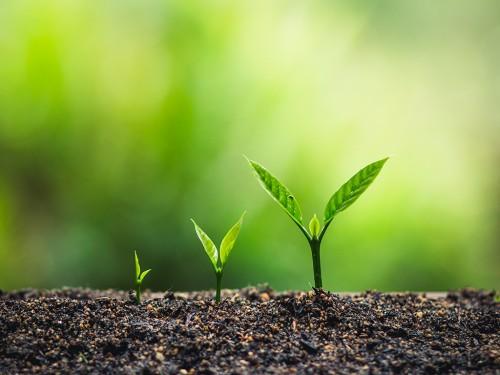 Preparo e manejo do solo no cultivo do café: O que devo saber?