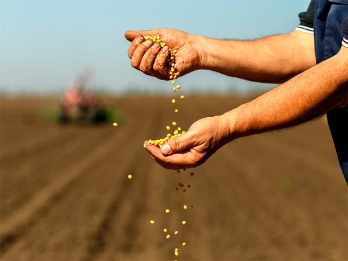 Plantio de Soja: Como Garantir uma Lavoura Produtiva