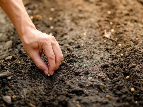 Preparo e manejo do solo para o plantio da soja