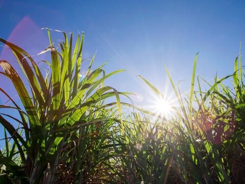 Ranking de Despesas em Tratos Culturais da Cana-de-Açúcar